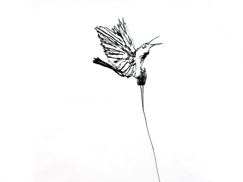 Oiseau parade