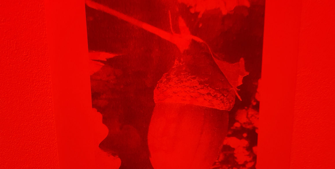 Photo : détail de l'exposition de Bernadette Gervais, fin de résidence d'auteure/illustratrice