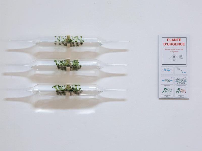 Photo : plante d'urgence, Camille Reidt