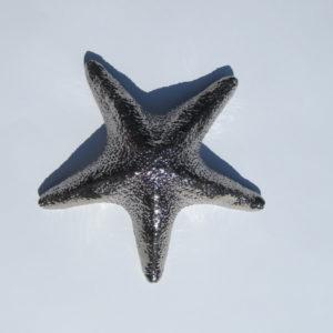 Image : étoile de mer dans le cadre du projet Aster réalisé par Delphine Gigoux-Martin