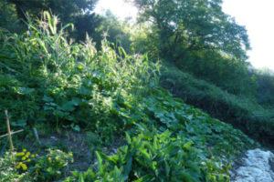 Photo : permaculture Au Bois De fargues