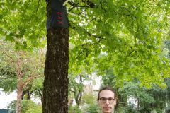 « À part les arbres »